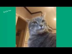 Funny Cats Vine Compilation 2015 - http://positivelifemagazine.com/funny-cats-vine-compilation-2015/