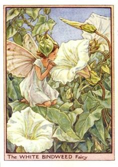 White Bindweed Flower Fairy Print c.1950 Fairies by Cicely Mary Barker