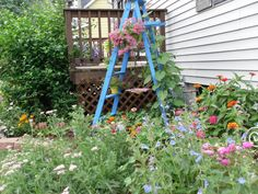 old wooden ladder found at a garage sale for a dollar...2 coats of outdoor paint transforms it into a trellis