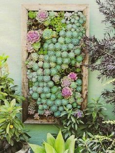 succulent wall gardens come in a variety of shapes and sizes. Check out some of our favorite succulent wall garden ideas.Vertical succulent wall gardens come in a variety of shapes and sizes. Check out some of our favorite succulent wall garden ideas. Vertical Planting, Vertical Succulent Gardens, Succulent Wall Art, Vertical Garden Diy, Succulents Garden, Succulent Planters, Wall Planters, Moss Garden, Succulent Favors