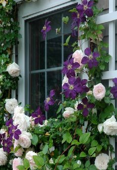 I love lush, abundant gardens, but in small spaces they can be difficult to  achieve, due to narrow borders that don't allow for multiple layers of  trees and shrubs. The answer when you can't go out is to go up, using one  climbing plant to support another; the classic example of this is the  pairing of a rose and a clematis.  I usually allow a newly planted climbing rose two full growing seasons to  become established and gain some height before adding a clematis, although  it is possi...