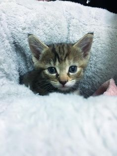 My girlfriend found 3 kittens in the basement of her work. We're keeping one of them http://ift.tt/2CYMf09