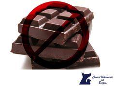LA MEJOR CLÍNICA VETERINARIA DE MÉXICO. Un rico alimento muy peligroso para tu mascota es el chocolate, este producto les puede provocar vómitos, diarreas, hiperactividad hasta llegar al paro cardíaco, infartos y muerte. Puede tardar horas e incluso días en manifestar los síntomas, y esto se debe a que el chocolate contiene teobromina, un alcaloide que es químicamente similar a la cafeína. En Clínica Veterinaria del Bosque, te invitamos a visitar nuestra página web para conocer nuestros…