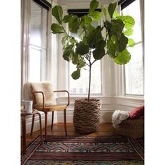 fun giant plants for home.