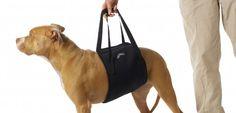 Cómo tratar la displasia de cadera en el perro - http://www.mundoperros.es/tratar-la-displasia-cadera-perro/