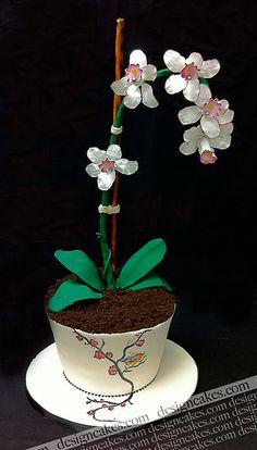 Orchid flower pot cake