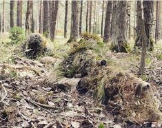 A sniper team with the Battalion, Royal Irish Regiment wear camouflage coverings to blend in with the forest floor. Note the extent to which the sniper's rifle has also been camouflaged. Sniper Camouflage, Military Camouflage, Military Weapons, Military Life, Ghillie Suit, Sniper Gear, Airsoft Sniper, Military Special Forces, Marine Corps