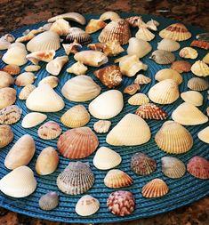 Thanks for sharing your Sanibel shell finds, How neat 🐚 Captiva Island, Fort Myers Beach, Pool Bar, Seashell Crafts, Island Resort, White Sand Beach, Sea Shells, Snails, Seashells