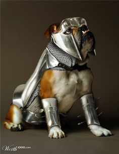 Bulldog in armor English Bulldog Breeders, Bulldog Puppies, Dogs And Puppies, Doggies, Dog Pictures, Animal Pictures, Dog Armor, Best Dog Costumes, Halloween Costumes