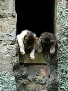 Animals And Pets, Baby Animals, Funny Animals, Cute Animals, Funny Cats, Crazy Cat Lady, Crazy Cats, I Love Cats, Cute Cats