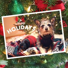 Share doggy holiday cheer with an adorable picture of your pets on one of our holiday cards!   Elli.com Christmas Photo Cards, Holiday Cards, Christmas Ideas, Wedding Stationery, Wedding Invitations, Cool Patterns, Bold Colors, Save The Date, Happy Holidays
