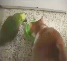 Fuck Off Bird