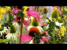 ▶ ♫♥ Garden of dreams ♫♥ Giovanni Marradi - YouTube  (3.45 min)