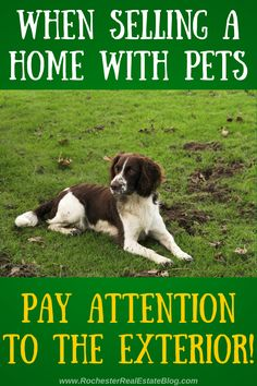 When Selling a Home With Pets, Pay Attention To The Exterior - http://www.rochesterrealestateblog.com/how-to-sell-a-home-with-pets/ via @KyleHiscockRE #realestate #homeselling