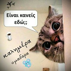 Good Night, Good Morning, Greek Words, Funny Photos, Beautiful Pictures, Friendship, Cute Animals, Cinema, Jokes