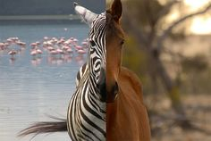 Why Don't We Ride Zebras Like Horses? | Mental Floss