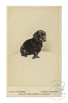 19th Century Dog - Limited Edition, Modern Archival Print