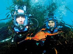 rare encounters sea creatures   None of the dive team had ever seen a weedy sea dragon, found only in ...