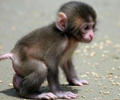 20 Baby Animals That Will Melt Even the Coldest Heart