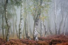 The gathering - Stanton Moor, Peak District, UK Landscape Photography, Nature Photography, Picture Tree, Arbour Day, Misty Forest, Fantasy Forest, Midsummer Nights Dream, Tree Forest, Fall Photos