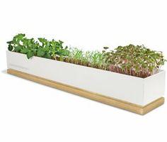 Micro Greens Grow Box - Veggie Micro Greens Potted Shed Creations,http://www.amazon.com/dp/B007PRMOGO/ref=cm_sw_r_pi_dp_mjNQsb0D3T669J14