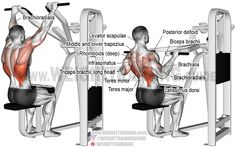 The machine front pull-down is a brilliant exercise with which you can build your back and arm muscles and develop your upper-body strength. Weight Training Programs, Weight Training Workouts, Workout Programs, Training Exercises, Good Back Workouts, Back Exercises, Shoulder Exercises, Barbell Hip Thrust, Latissimus Dorsi