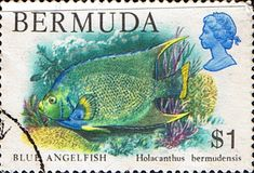 Bermuda 1978 Wildlife Blue Angelfish Fish SG 400 Fine Used Scott 376 Other West Indies and British Commonwealth Stamps HERE!