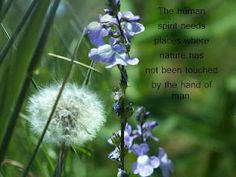 The human spirit needs places where nature has not been touched by the hands of man.