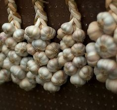 How to grow garlic in containers.  Excellent, clear advice