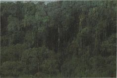 Armando Morales (Nicaraguan, 1927-2011), Tropical Rain Forest, Biological Reserve Indio Maíz, Nicaragua, 2003. Oil on canvas with beeswax