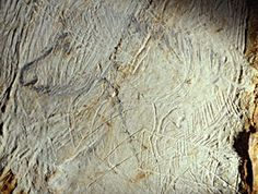 We can now state that the Cosquer Cave used to be one of the most important cave art sites in Europe, comparable to Lascaux, Trois-Frères, Altamira or Chauvet. Art Pariétal, Paleolithic Art, Art Rupestre, Beneath The Sea, Art Sites, Sea Art, Human Art, Rock Art, Horse Drawn