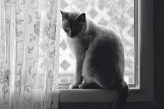 cat with a lace curtain