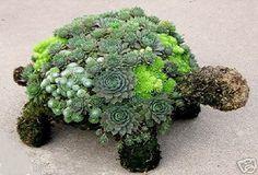 Succulent turtle topiary