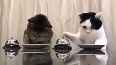And they say you can't really train cats? This video shows two extremely cute cats ringing a bell to ask for food from their owner. OK, so the cats are really just meeting Cute Funny Animals, Cute Baby Animals, Cute Cats, Funny Cats, Sleepy Animals, Funny Humour, Adorable Kittens, Fun Funny, Cute Animal Videos
