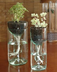 What to do with your left over wine bottles and your party! Repurposed self watering wine bottle planters!