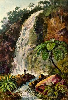 Ernst Haeckel, Wanderbilder: Die Naturwunder der Tropenwelt (Ceylon und Insulinde); Volume 1, Koehler, ca. 1906. via http://magictransistor.tumblr.com/post/107478786196/ernst-haeckel-wanderbilder-die-naturwunder-der