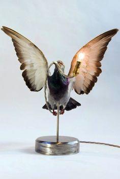 Alex Randall pigeon light from rockett st george