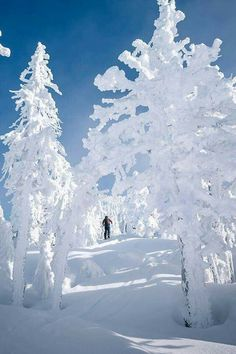Perfect place to go snow shoeing. #snow