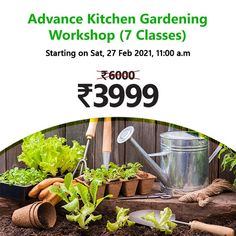 Have always dreamt of having a small kitchen garden but could never find the courage to get started? Well, fret not !!! On popular demand, nurserylive is here with another edition of Kitchen Gardening Workshops. Flowering Plants, Planting Flowers, Planter Accessories, Save Mother Earth, Kitchen Gardening, Gardening Courses, Plant Markers, Free Plants, Bulb Flowers