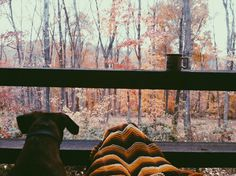 Autumn morning from the cabin