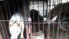 Petition · President of the United Nations Economic and Social Council (ECOSOC): Add Ending the Cruelty of the Dog and Cat Meat Trade to the UN ECOSOC Global Goals! · Change.org