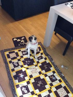 Quilt for the pug