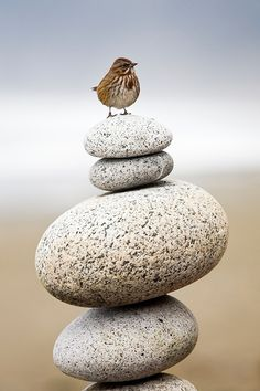 I couldnt help it .. love the round rocks and love the tiny bird. Covers two of my boards ..lol