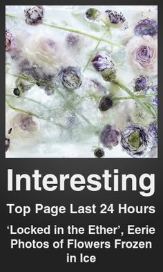 Top Interesting link on telezkope.com. With a score of 582. --- 'Locked in the Ether', Eerie Photos of Flowers Frozen in Ice. --- #interesting --- Brought to you by telezkope.com - socially ranked goodness.