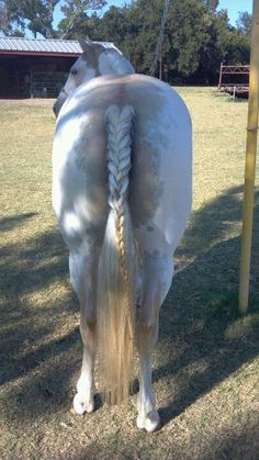 Did my horses tail.