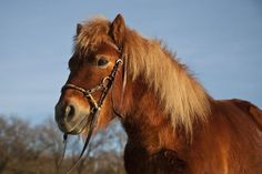 Is a Bitless Side Pull Bridle Right For You and Your Horse?