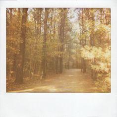 Fall Park. 2010 {Polaroid Spectra: Amy Sandoval Photography}