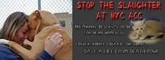6/28/17 🆘🆘🆘 13 DOGS 🆘🆘AND 18 CATS 🆘🆘 ARE LISTED TO GET MURDERED IN THE HOUSE OF HORROR NYC ACC ON 6/28/17!! DO SOMETHING TO SAVE THEM NEW YORKERS!! THIS HAPPENS IN YOUR TOWN! ONLY YOU CAN GET THE SICK DEVILS HATING ANIMALS OUT OF THAT PLACE !! /IJ 🆘🆘🆘🆘