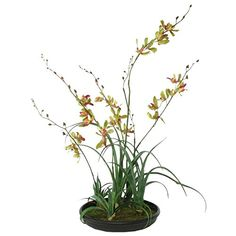 5 GREEN SILK ONCIDIUM ORCHID STEMS WITH 5 FAUX GRASS SPRIGS PLANTED IN FAUX DIRT  GRASS IN BLACK ACRYLIC CONTAINERPLANTERPOT *** You can get more details by clicking on the image.