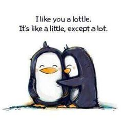 I like you a lottle. Aww thanks Barbara:). I like you a lottle too:) Cute Friendship Quotes, Cute Quotes, Funny Quotes, Qoutes, Quotations, Quotes Pics, Penguin Love Quotes, Cute Sayings, I Like You Quotes